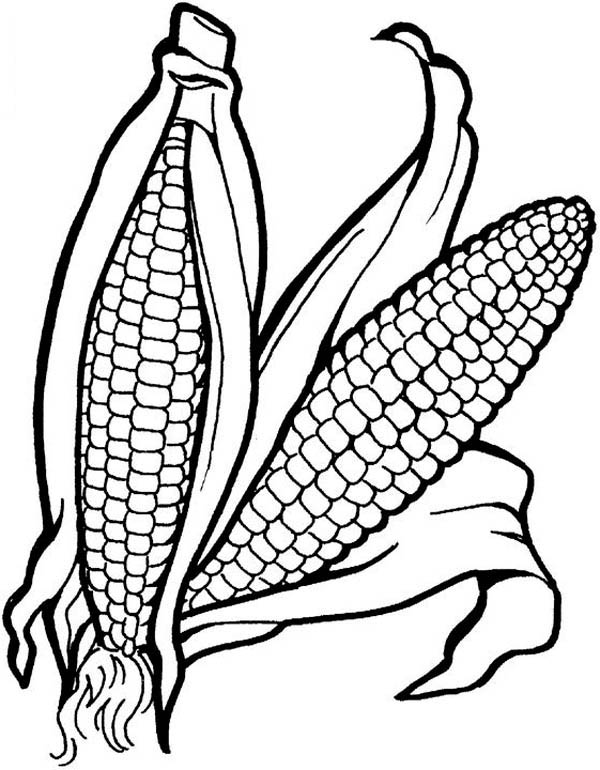corn colouring page corn coloring page vegetables corn coloring
