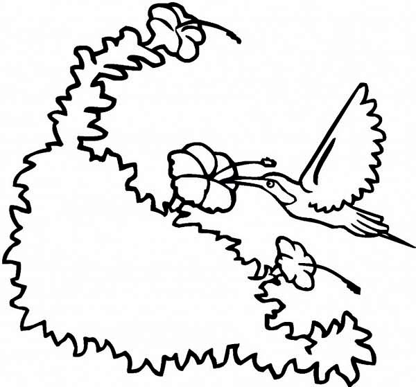 hummingbird flower coloring pages hummingbirds flowers provide - Hummingbird Flower Coloring Pages