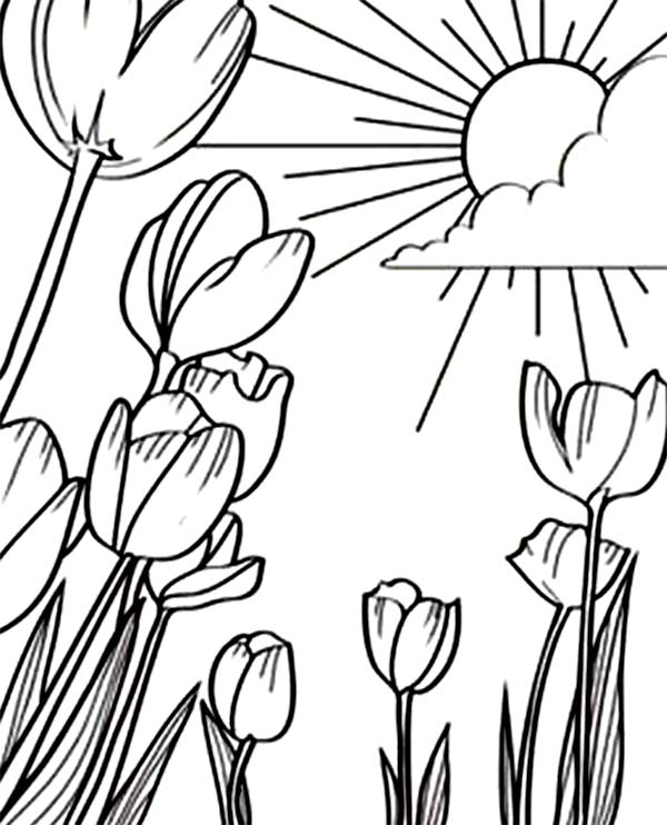 sunshine coloring printable - Sunshine Coloring Pages Printable