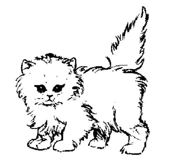 cat coloring pages and printable