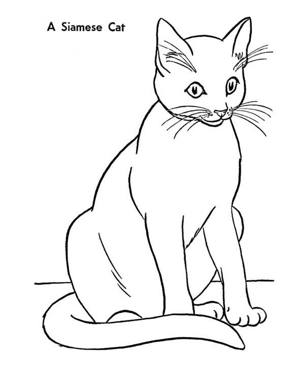 an elegant siamese kitty cat coloring page siamese