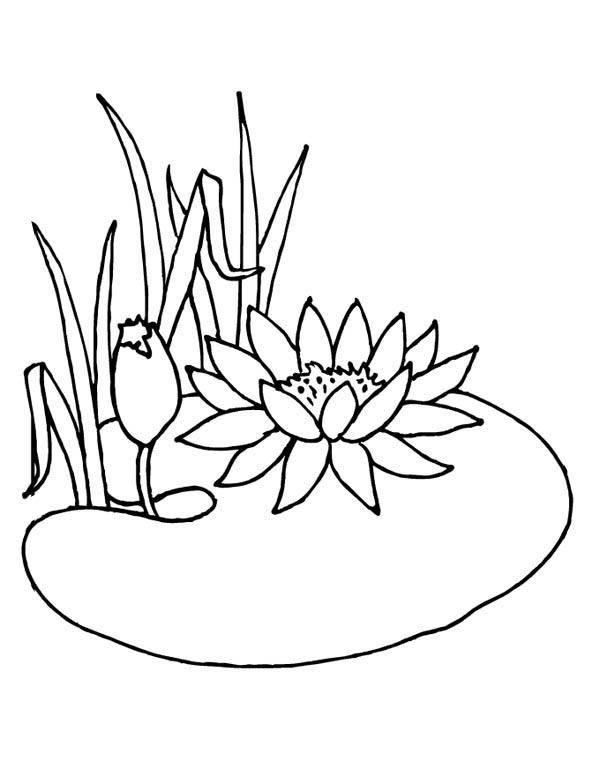 lotus flower is not water lily coloring page lotus flower is not on coloring pages water - Monet Coloring Pages Water Lilies