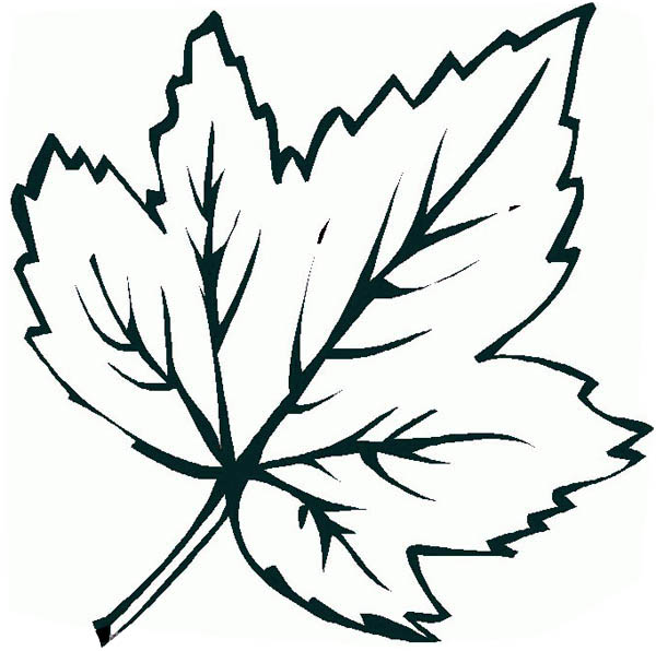 Maple Leaf Printable Coloring Page  Coloring Pages For Kids and