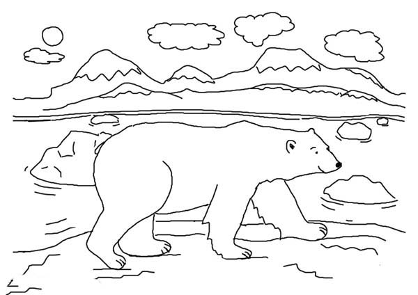 bear color pages cute polar bear coloring page cute polar bear