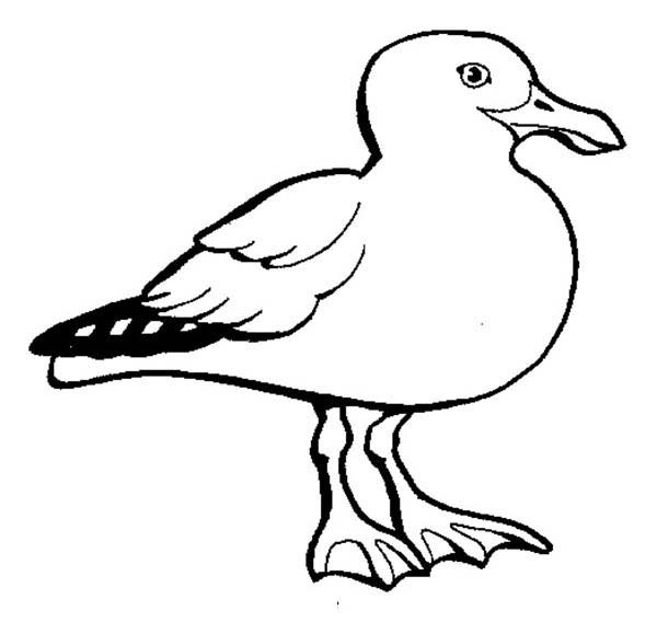 seagull coloring page  Coloring Pages For Kids and All Ages