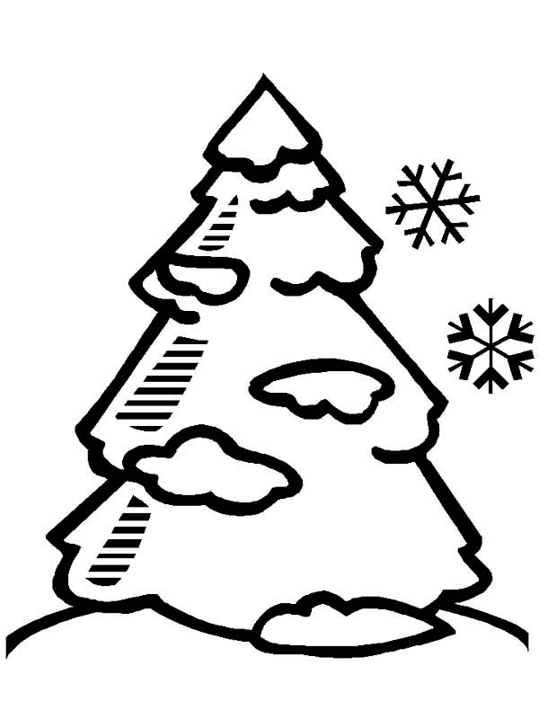 Winter, : A Pine Tree Covered with Snow on Winter Coloring Page