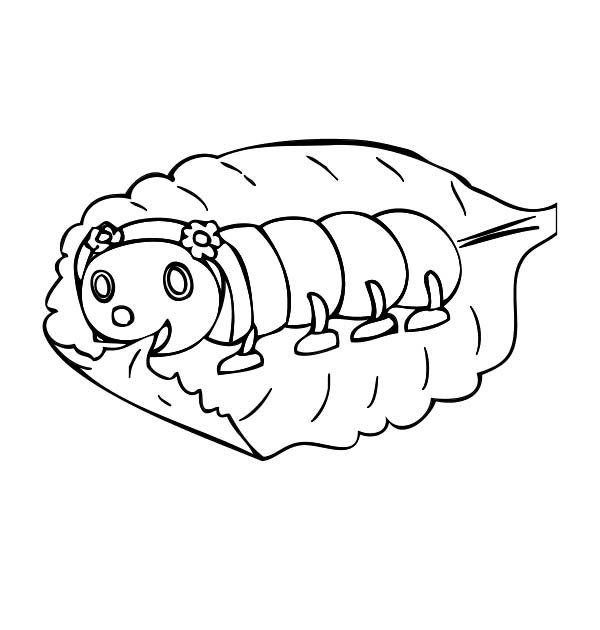 Caterpillars, : A Baby Caterpillar Eating Leaf Slowly Coloring Page