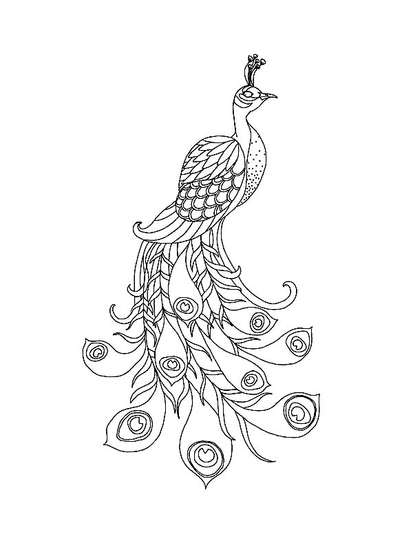 Peacock, : A Beautiful Peacock with His Long Train Coloring Page