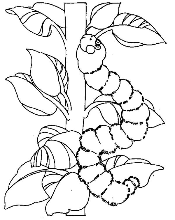 Caterpillars, : A Caterpillar Squeezing on the Trunk Coloring Page