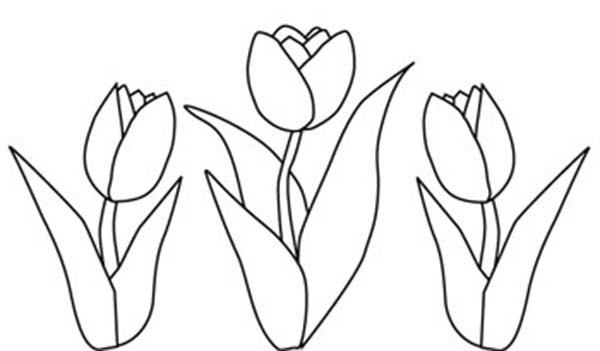 Tulips, : A Drawing of Double Bloom Tulips Coloring Page