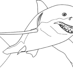 a drawing of great white shark from the front coloring page - Great White Sharks Coloring Pages
