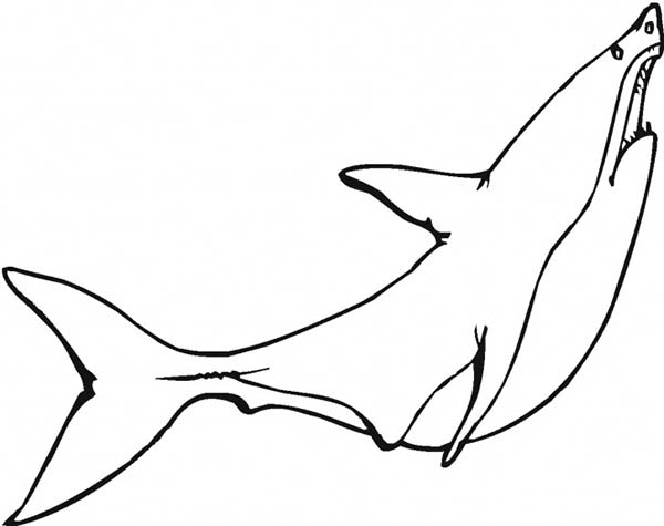 Sharks, : A Great White Shark is Ready to Jump Up from the Water Coloring Page
