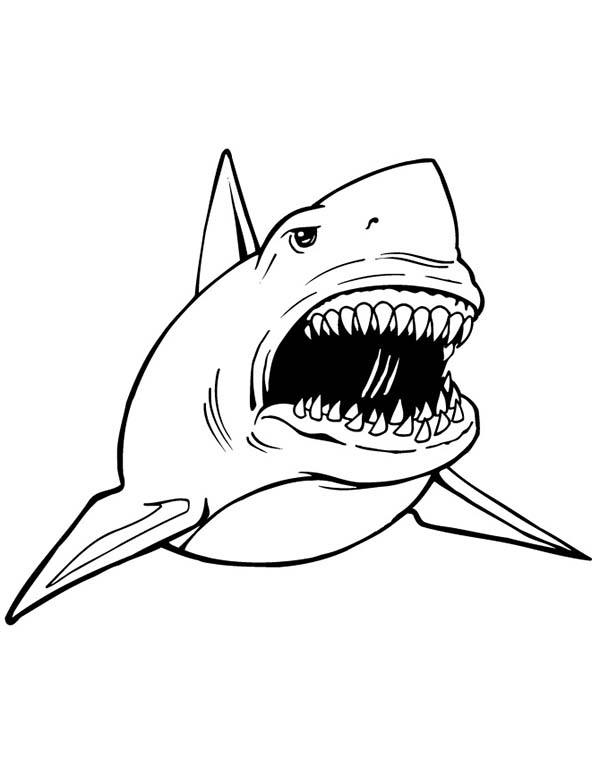 Sharks, : A Great White Shark with Frightening Open Jaw Coloring Page