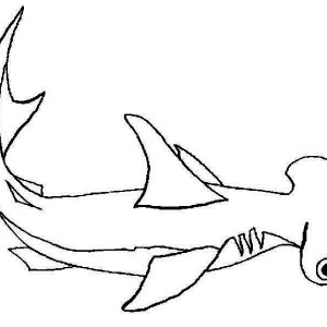 White Tip Shark ColoringTipPrintable Coloring Pages Free Download