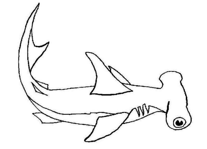 cute hammerhead shark coloring page photo23