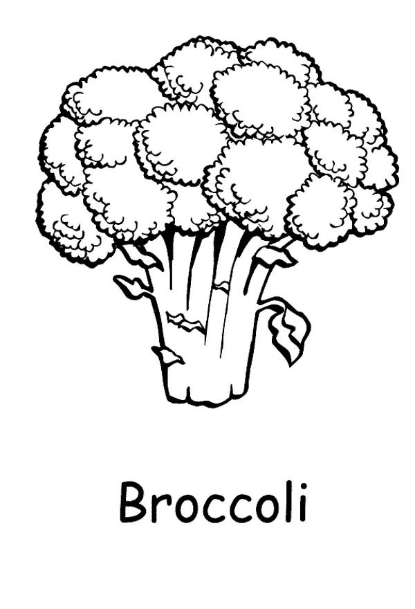 Fruits and Vegetables, : A Healthy Green Broccoli Coloring Page