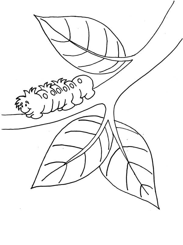 Caterpillars, : A Little Hairy Caterpillar Moving on the Branch Coloring Page