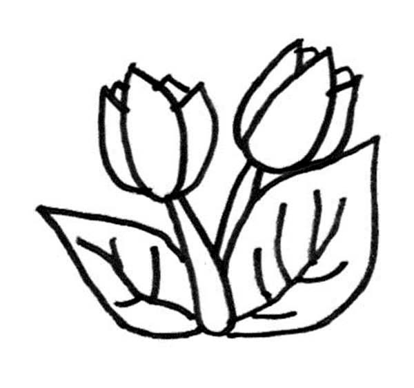 Tulips, : A Lovely Double Bloom Tulips Coloring Page