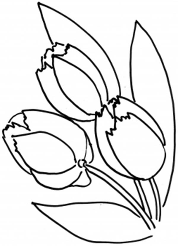 Tulips, : A Lovely Fringed Tulips Ready to Harvest Coloring Page