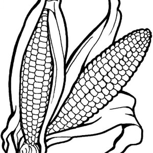 a pair of corn vegetables coloring page - Coloring Pages Leafy Vegetables