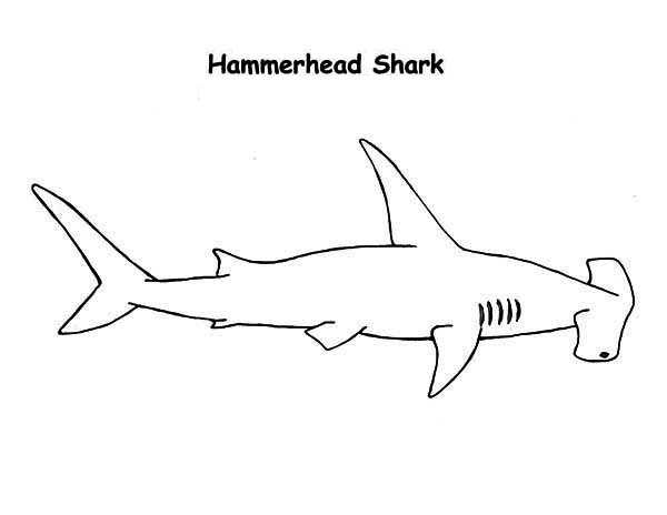 Sharks, : A Realistic Drawing of Hammerhead Shark Coloring Page