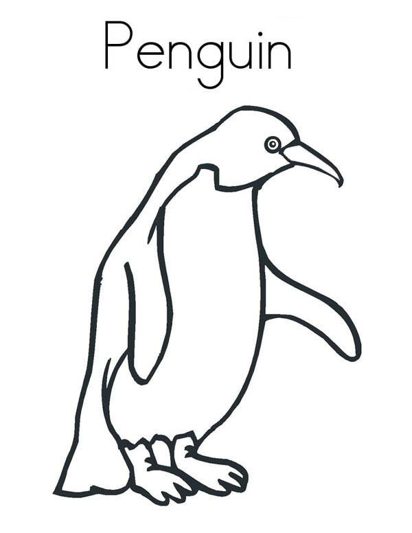 Penguins, : A Realistic Drawing of Humboldt Penguin Coloring Page