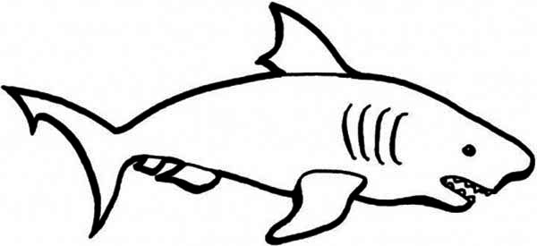 Sharks, : A Simple Drawing of Blue Shark Coloring Page