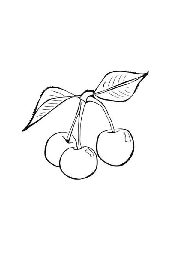 Fruits and Vegetables, : A Stalk of Cherry Fruit Coloring Page