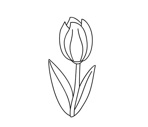 Tulips, : A Sweet Single Standard Tulip Coloring Page