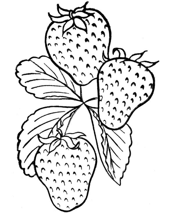 Fruits and Vegetables, : A Tasty  Strawberry Fruit Coloring Page