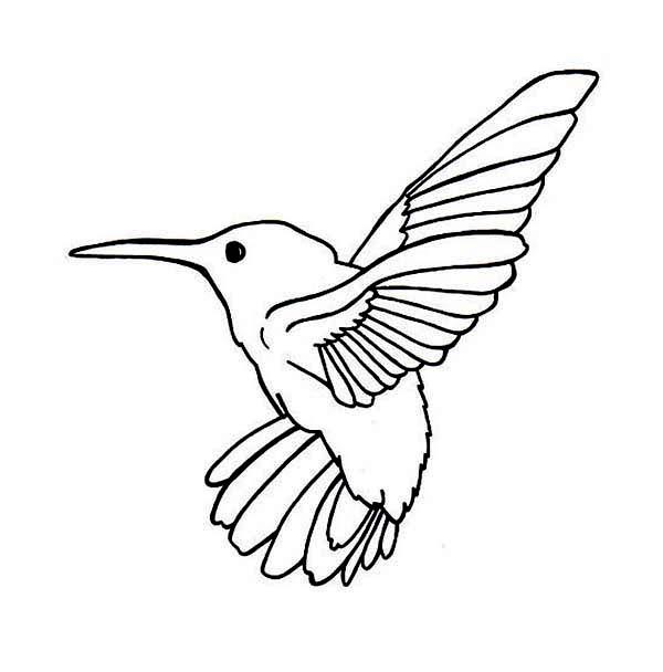 Hummingbirds, : Allens-Hummingbird-Coloring-page.jpg