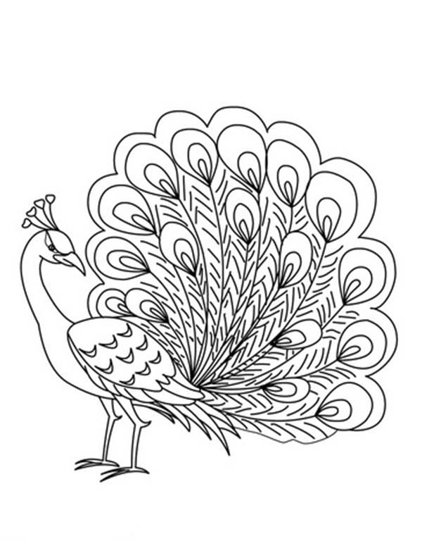 An Elegant Peafowl Male Peacock Coloring Page Kids Play