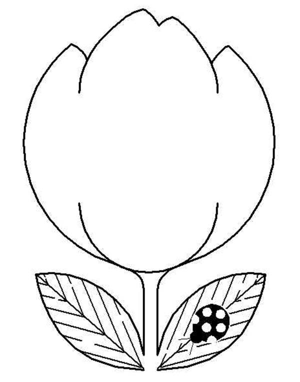 Tulips, : An Illustration of Double Bloom Tulip Coloring Page