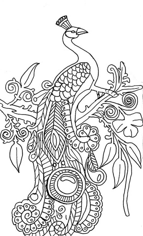 Peacock, : An Illustration of Green Peacock Coloring Page