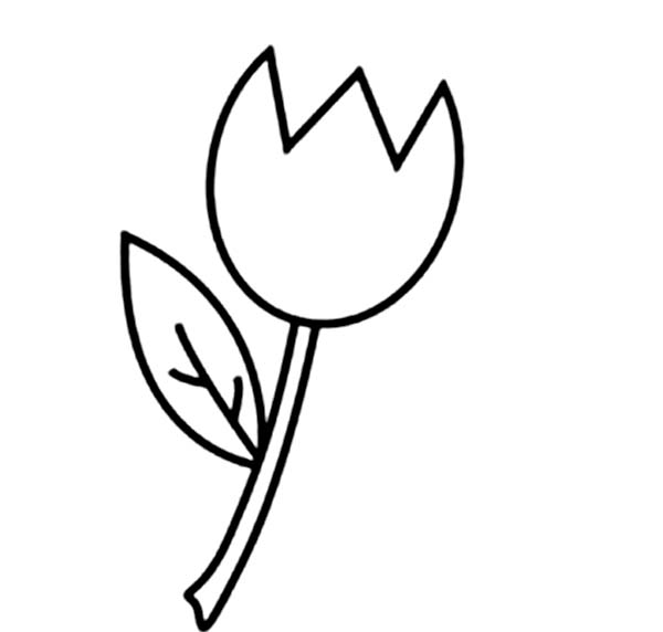 Tulips, : An Illustration of Single Finged Tulip Coloring Page