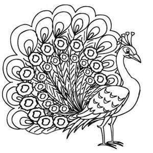 Peacock Dancing Sketch Peacock Coloring Page