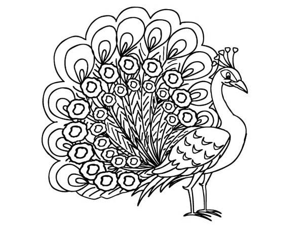 Peacock, : Beautiful Peahen a Female Peacock Coloring Page