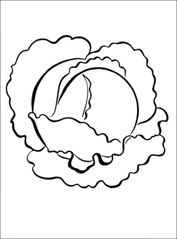 Fruits and Vegetables, : Cabbage Vegetables Coloring Page
