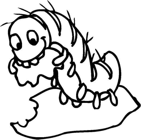 Caterpillars, : Caterpillar Eat a Leaf Voraciously Coloring Page