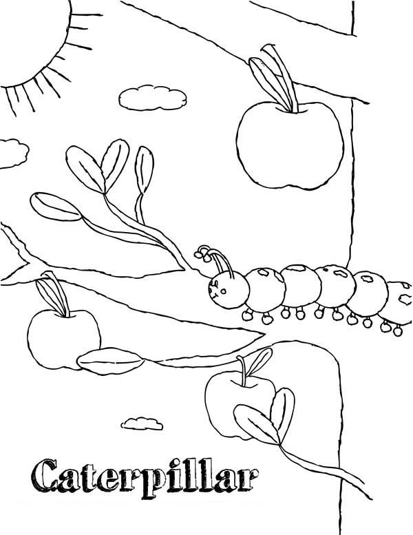 Caterpillars, : Caterpillar in the Apple Tree Coloring Page