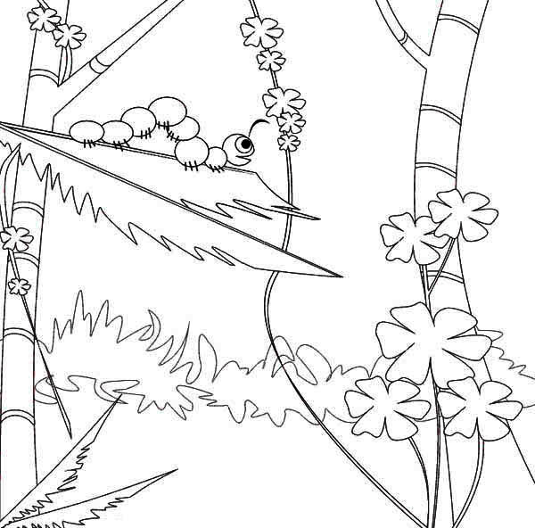 Caterpillars, : Caterpillar in the Wild Coloring Page