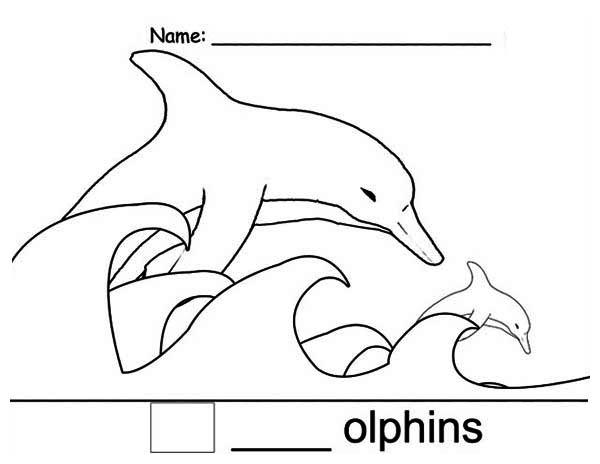 Dolphin, : D_Dolphin_Color.jpg
