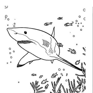 great white shark is hunting for the prey coloring page - Great White Sharks Coloring Pages