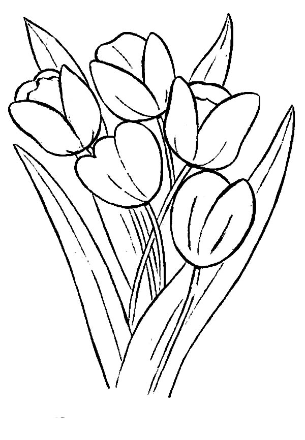 Tulips, : Growing Tulips in a Farm Coloring Page