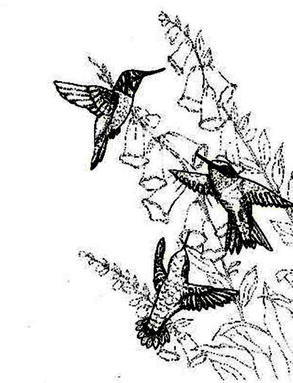 Hummingbirds, : Hummingbird-activity-on-spring-season-coloring-page.jpg