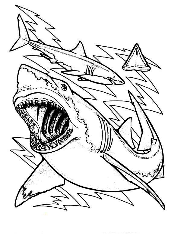 Sharks, : The Anatomy and Teeth of the Great White Shark Coloring Page
