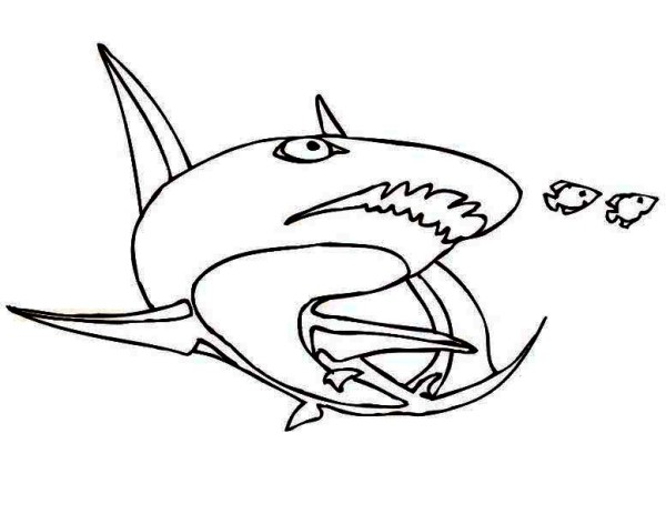 Sharks, : This Shark is Chasing Two Little Fish Coloring Page