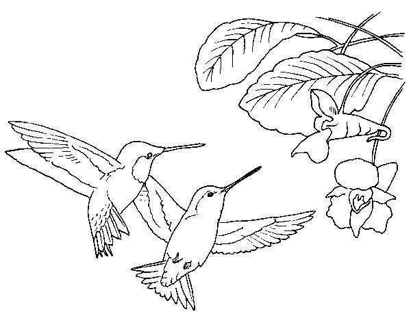 Hummingbirds, : Two-Black-chinned-Hummingbird-looking-for-flowers-coloring-page.jpg