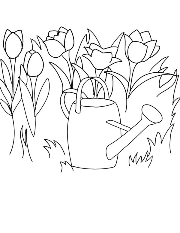 Tulips, : Watering the Tulips with Watercan Coloring Page