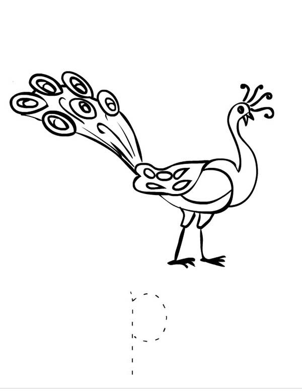 Peacock, : Write Letter P for Peacock Coloring Page